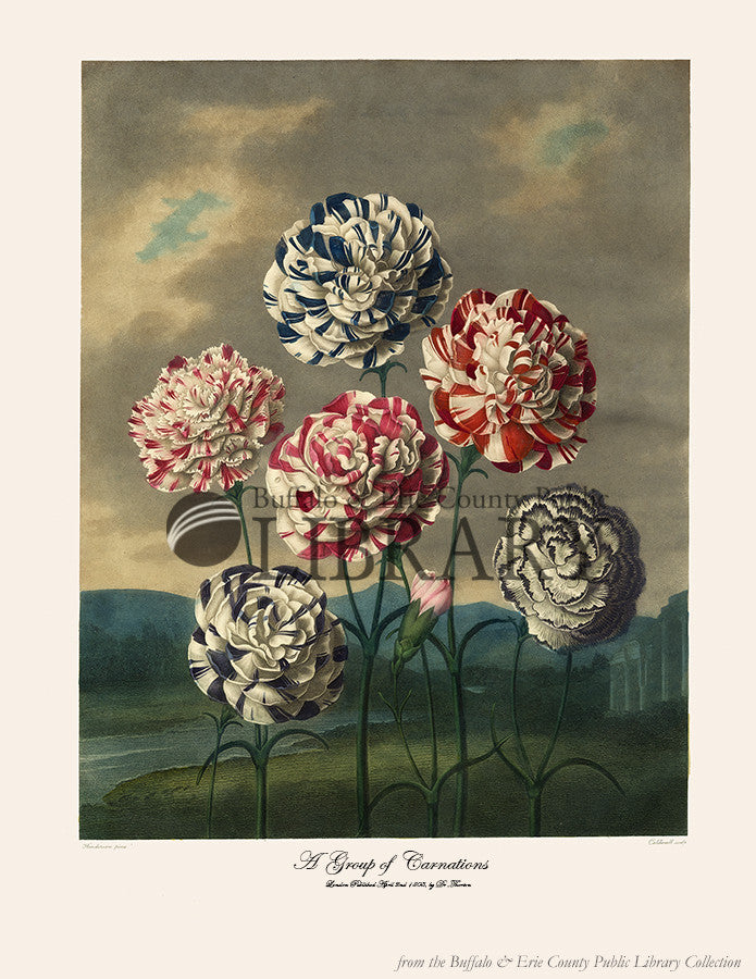 A Group of Carnations, 1807