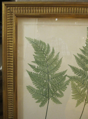 Thomas Moore (British, 1821-1887), Lastrea foenisecii, Plate XXVII, from The Ferns of Great Britain and Ireland...nature-printed by Henry Bradbury, London, 1855, electrotype
