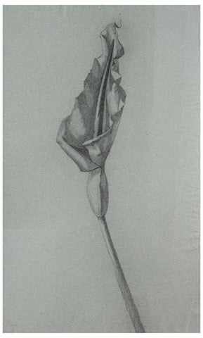 Eugéne Fourault (French), Still Life, ca. 1880, charcoal on paper