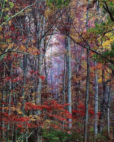 Christopher Burkett (American, b. 1951), Glowing Autumn Forest, Virginia, Ilfochrome color photograph, signed