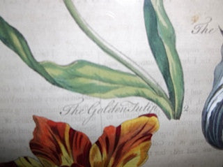 "John Hill (British, 1714-1775), ""Eden: or A Compleat Body of Gardening..."", six handcolored engravings, 1757"