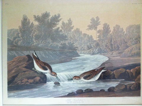 After John James Audubon (1785 -1851), Little Sandpiper (Plate CCCXX)/Least Sandpiper, aquatint in colors, 1836