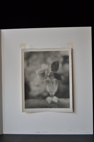 Josef Sudek (Czech, 1896-1976), Rose in Glass, ca. 1950, vintage gelatin print (P805)