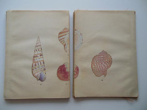 """Kai Senshu"" (Conchology), Vols. 1 & 2, Yoichir_ Hirase, containing 40 woodblock prints, pub. Kyoto, Unsodo, Taisho, 1914 and 1915"