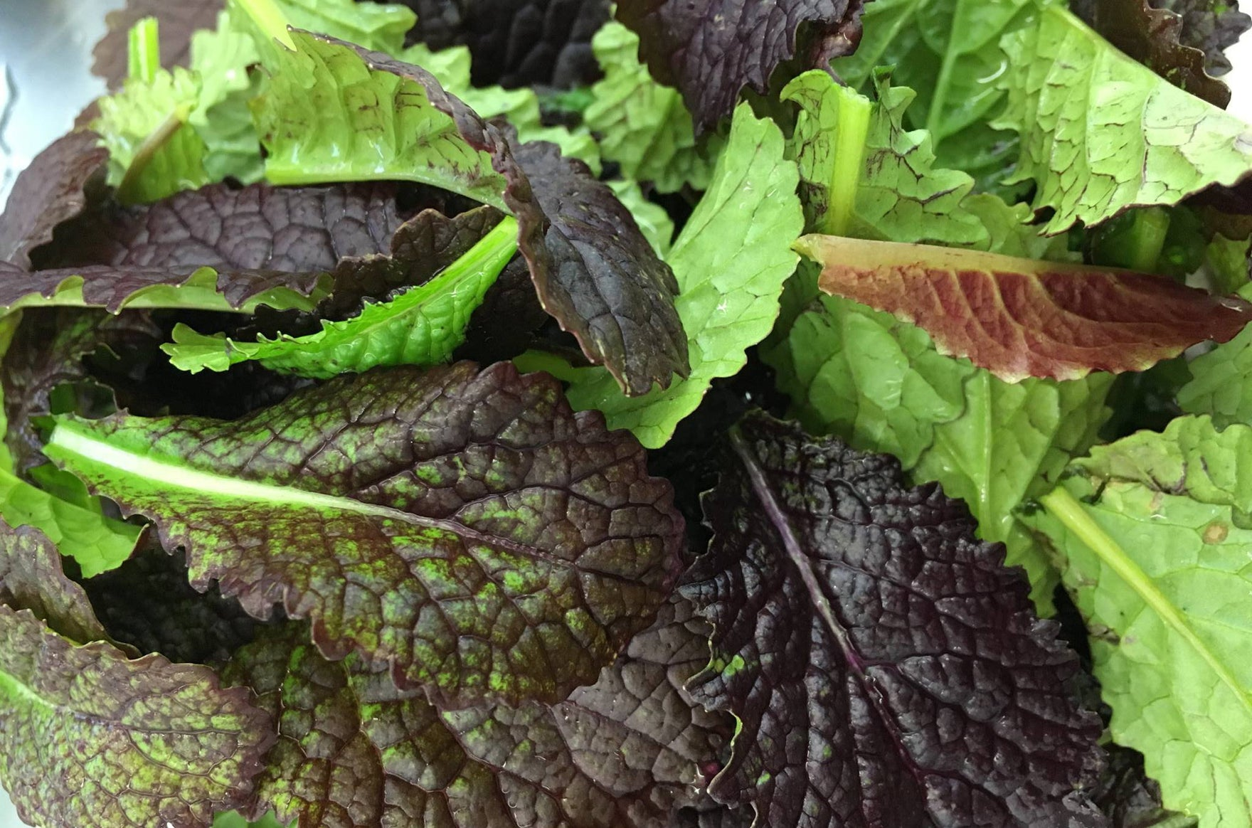 Green of the Week: Giant Red Mustard Greens