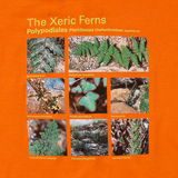 Taxa Shirt 2: The Xeric Ferns