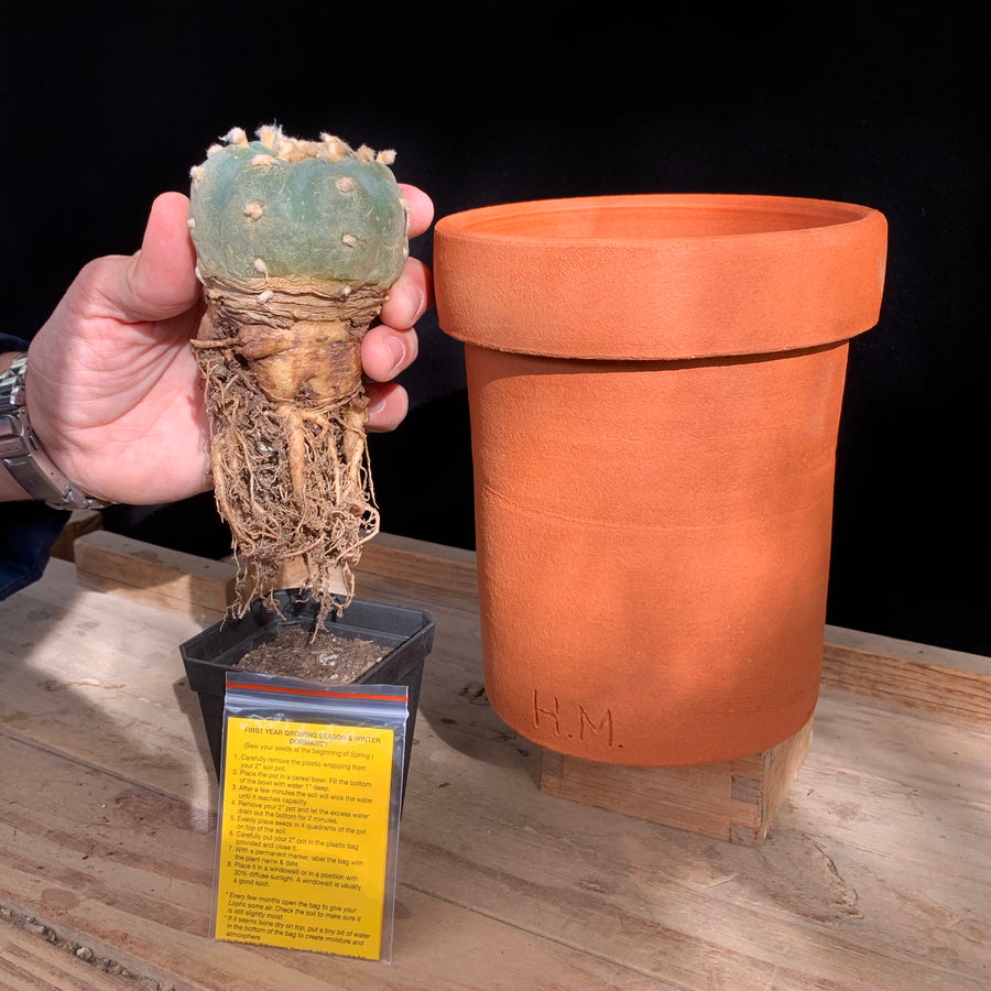Peyote Pot grow kit by Hamilton Morris