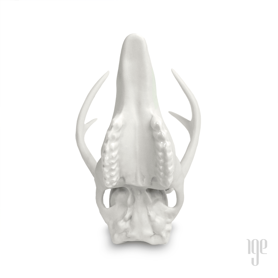Porcelain White Tail Deer Skull