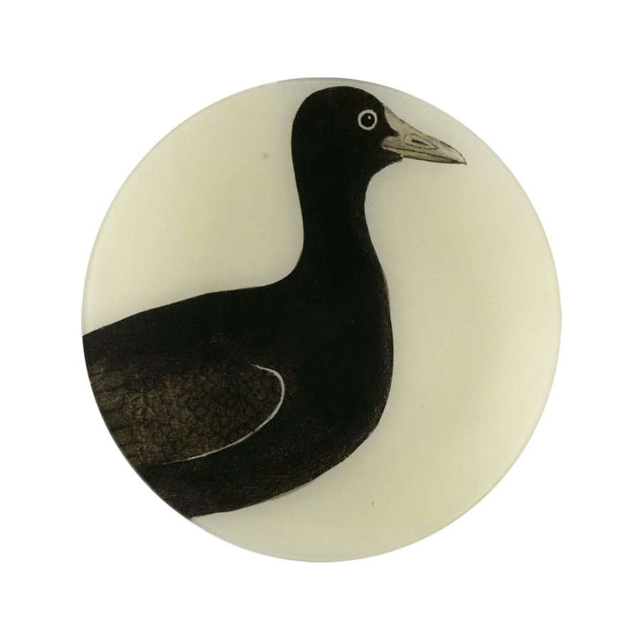 Bird Portraits Plate: Bald Coot