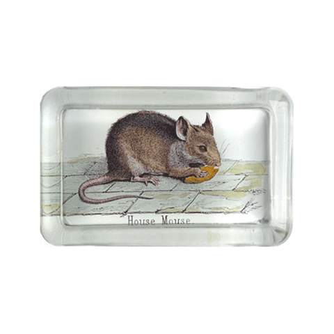 18th Century Calling Cards Tray: Grapevine