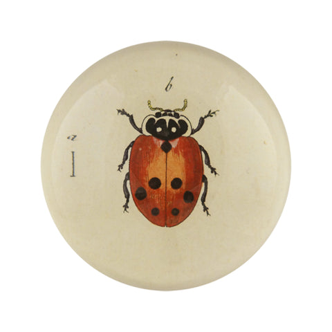 Little Ladybug Domed Paperweight