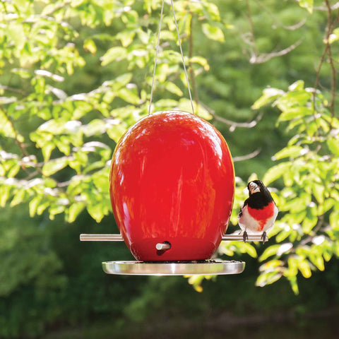 Egg Bird Feeder with Grosbeak