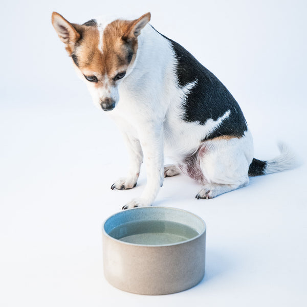 Utilità Pet Bowls - Small Light Aqua