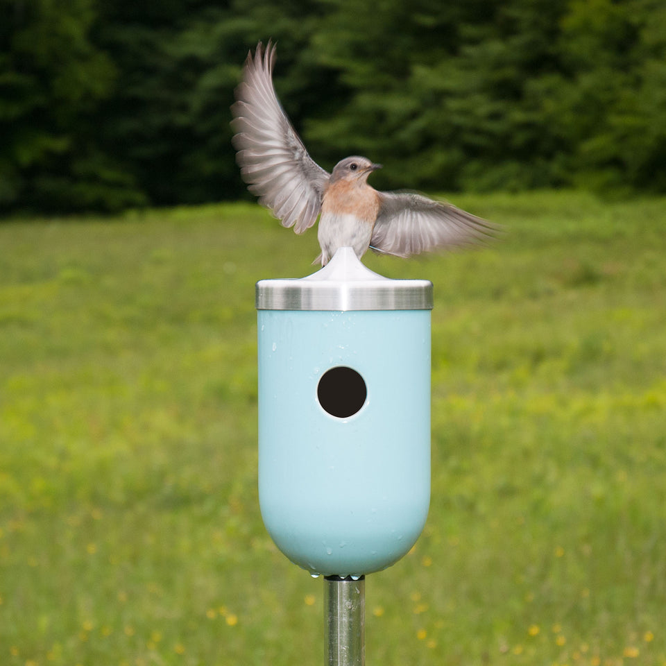 J Schatz Nut Bird House in Light Aqua with Bluebird