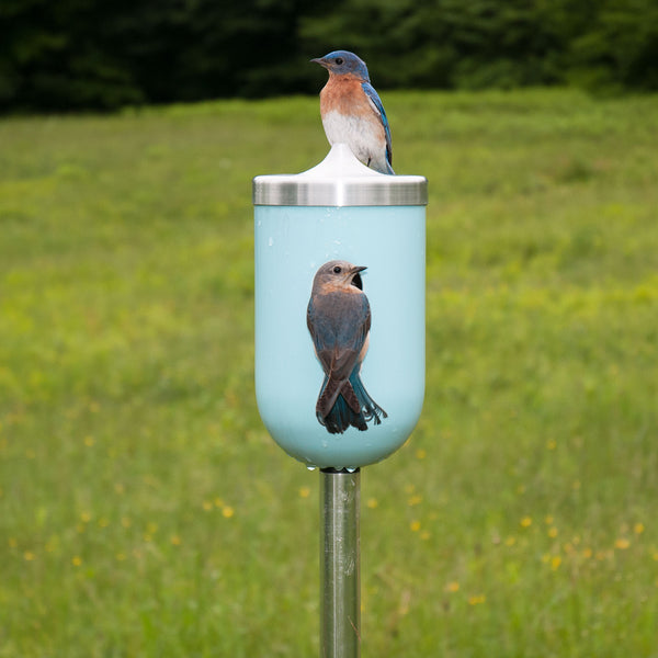 J Schatz Nut Bird House in Light Aqua with Bluebirds