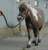 Cavallo Cute Little Boot or Mini Boot for tiny hooves.