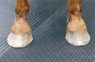 Horse Comfort Mayo Mats for stables.  Made from EVA in 24mm and 34mm thickbness. Light and comfortable.