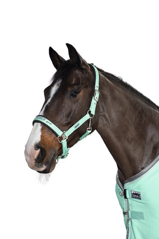 Eskadron Classic SS18 Pin Buckle Glossy Headcollar - Jade - Divine Equestrian