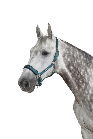 Eskadron Classic AW19 Double Pin Glossy Headcollar - Tealblue - Divine Equestrian