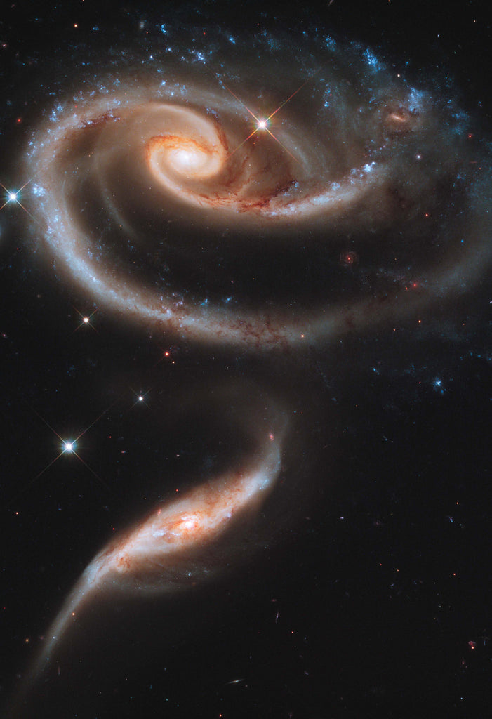 Space Poster of a Rose Made of Galaxies