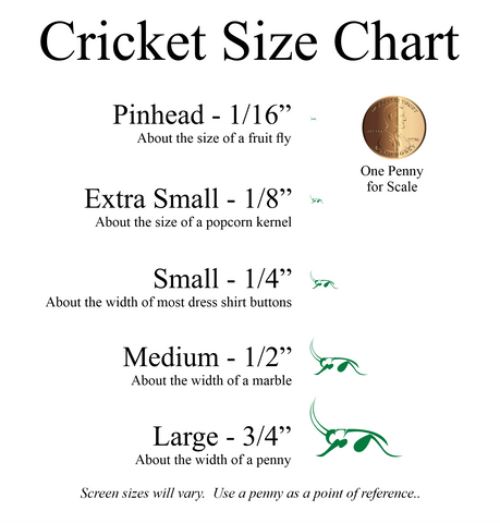 """Live Crickets (Gryllodes Sigillatus or Banded Cricket) delivered straight to your door with free shipping. We have Pinheads (1/16""""), Extra Small (1/8""""), Small (1/4""""), Medium (1/2""""), and Large (3/4"""")."""