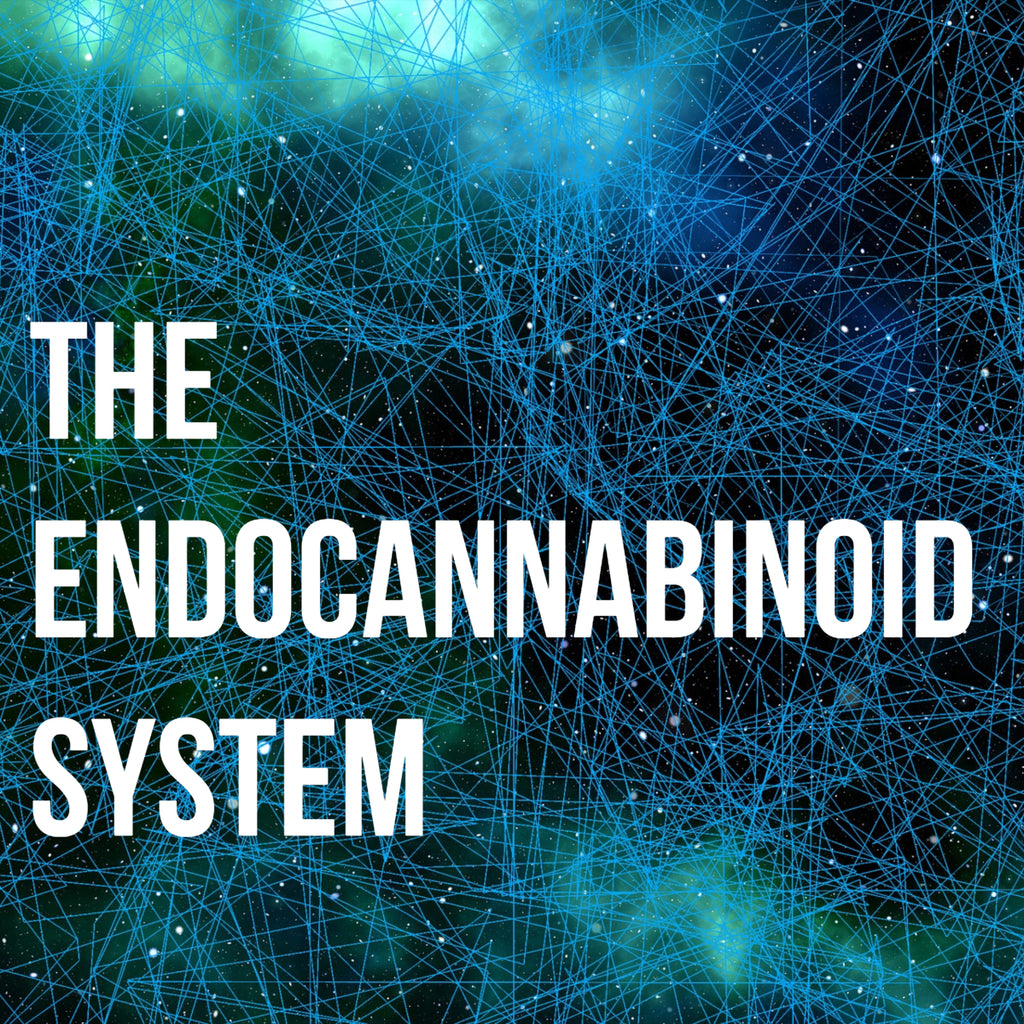 Cannabinoids and Your Body