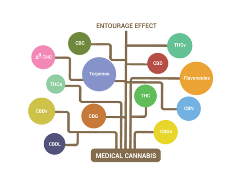 Entourage Effect; Cannabinoids/Terpene Interactions