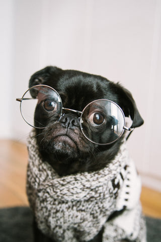Good boy with glasses, ready to study