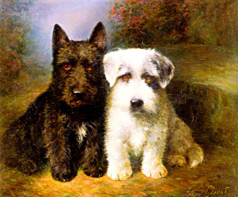 Cheviot-A Scottish Terrier And A Sealyham Terrier