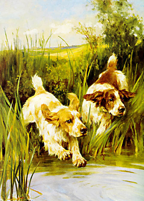 Arthur Wardle-Cocker Spaniels