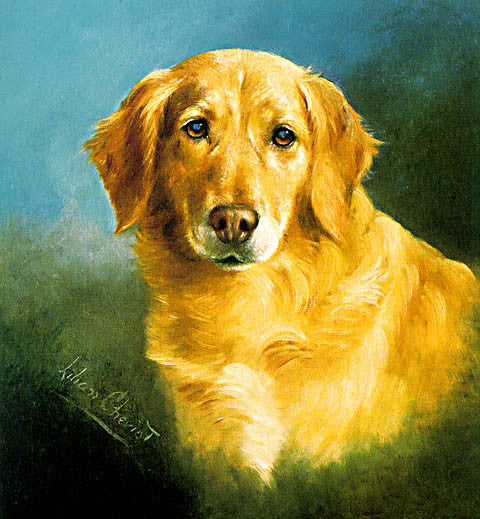 Cheviot-Golden Retriever