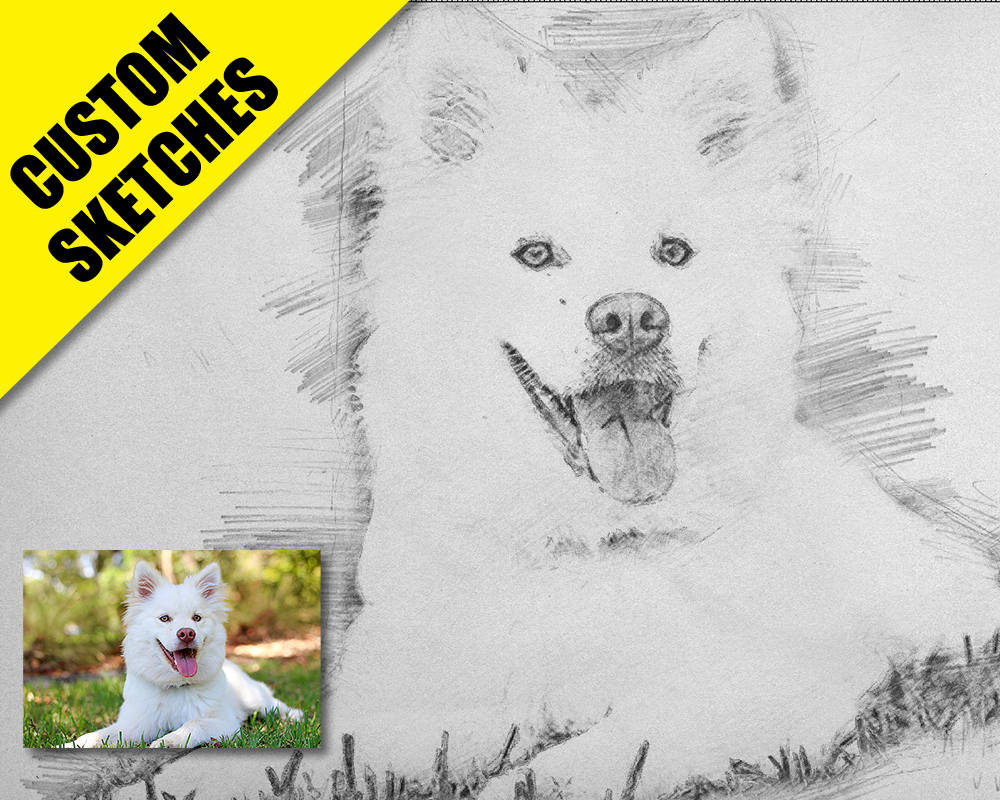 Dog portrait custom sketch-1