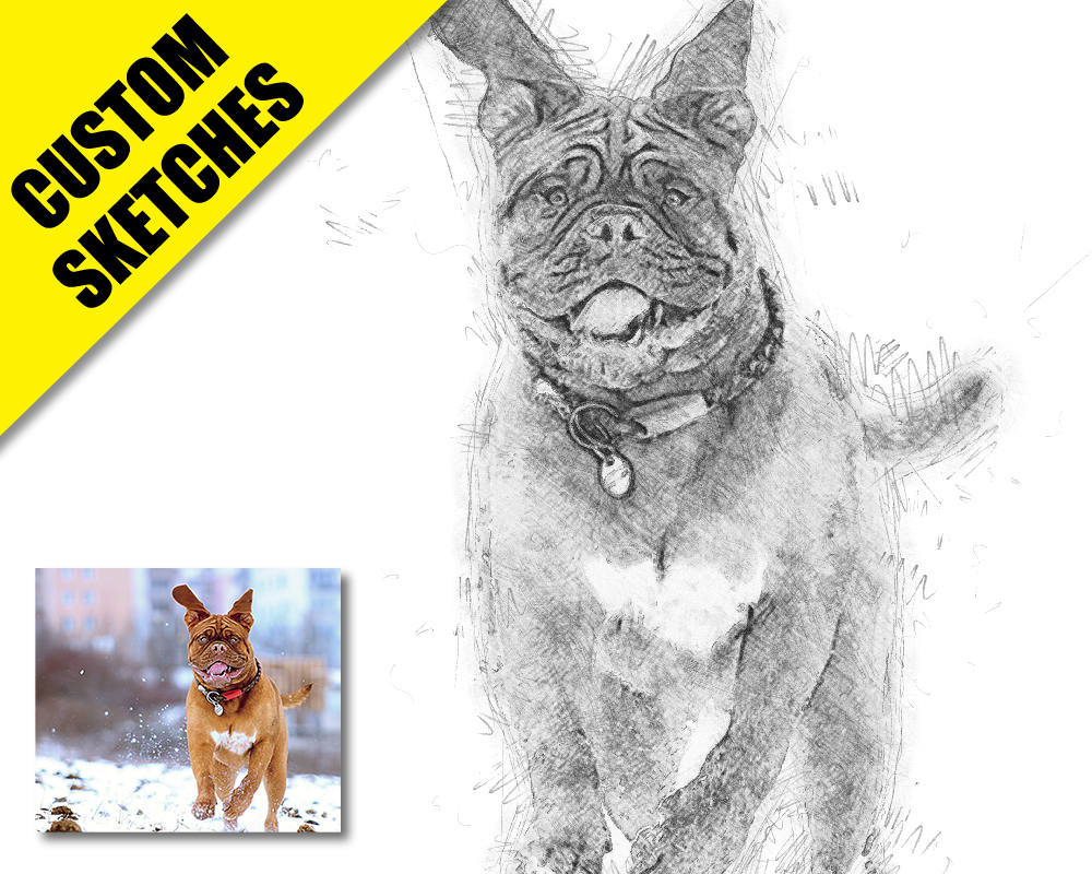 Custom pet portrait custom sketch-1