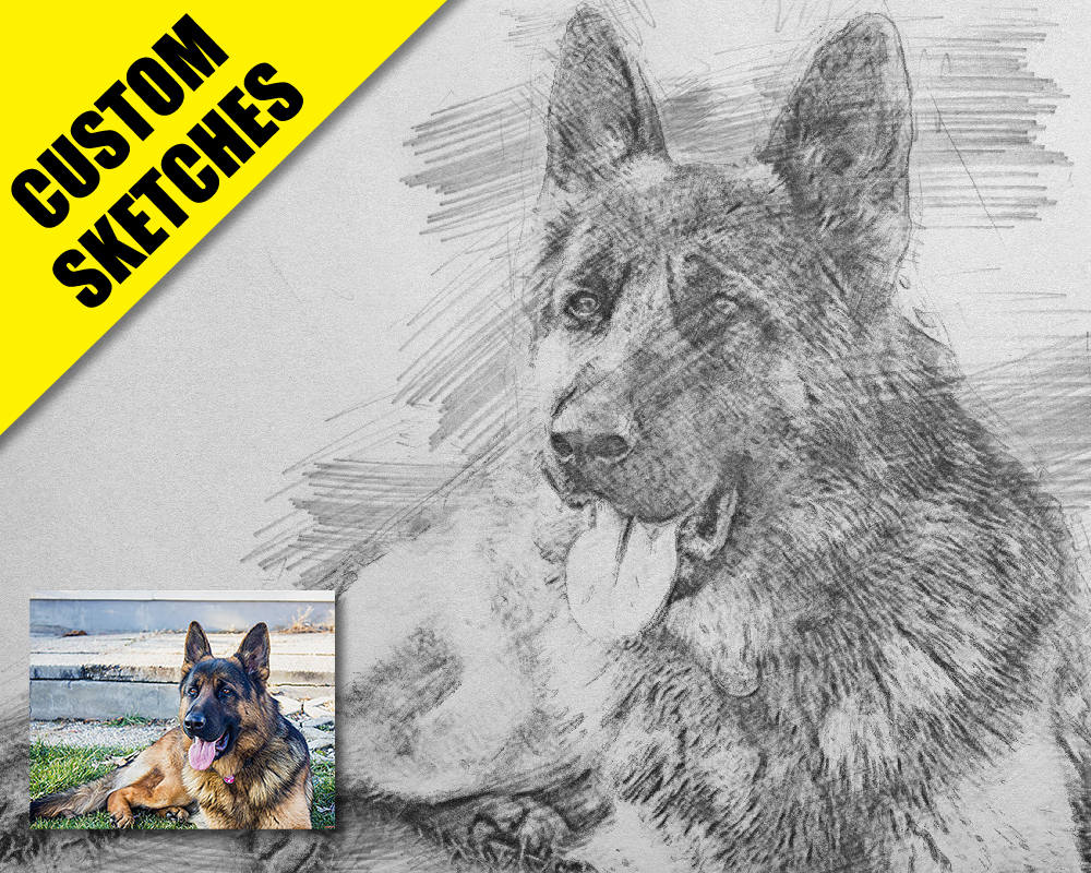Pet portrait custom custom sketch-1