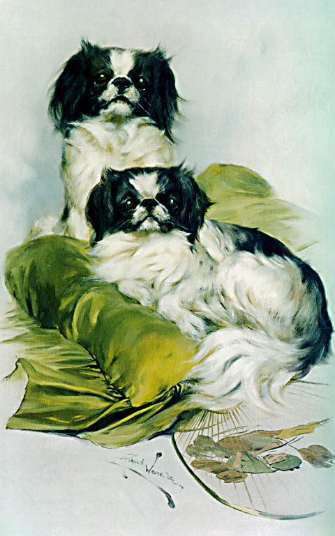 Arthur Wardle-Japanese Chin