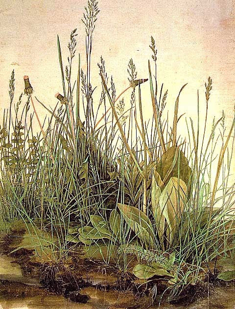 Albrecht Durer-The Large Turf