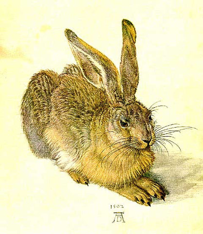 Albrecht Durer-Young Hare (Rabbit)