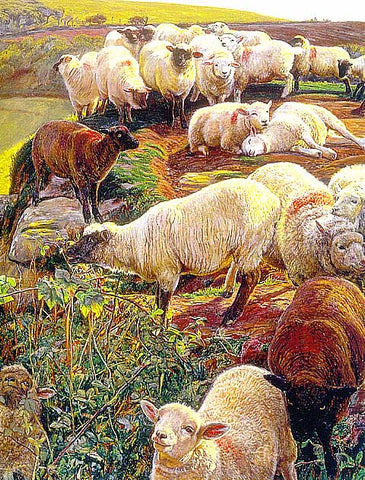 W. Hollman-Stayed Sheep