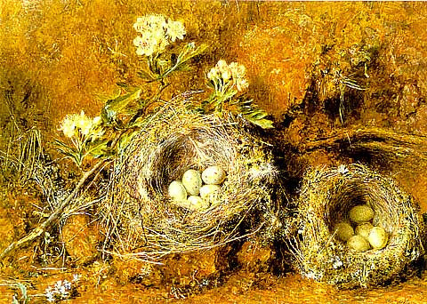W. H. Hunt-Birds Nest And Blossom