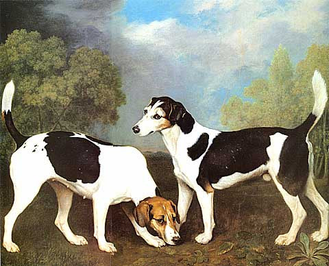 George Stubbs-A couple of Foxhounds