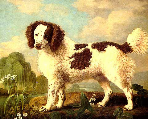 George Stubbs-Brown and White Norfolk