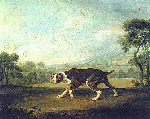George Stubbs-Spanish Pointer