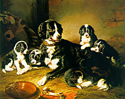 Kack Russell-Border Coli And Her Puppies