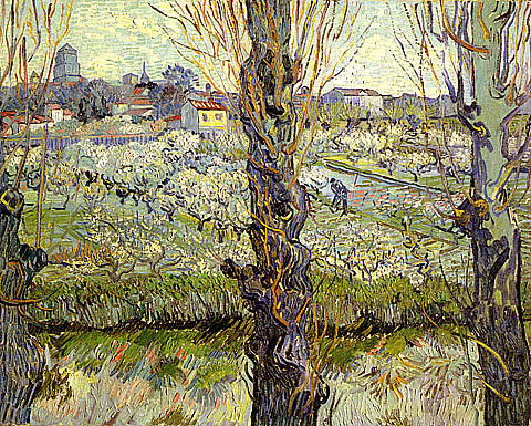 Vincent Van Gogh-Orchard In Bloom With Poplars