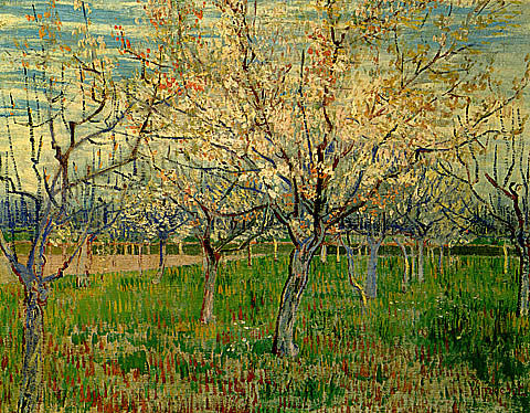 Vincent Van Gogh-Orchard With Blossoming Apricot Trees