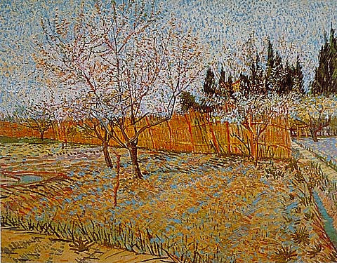 Vincent Van Gogh-Peach Trees 1888