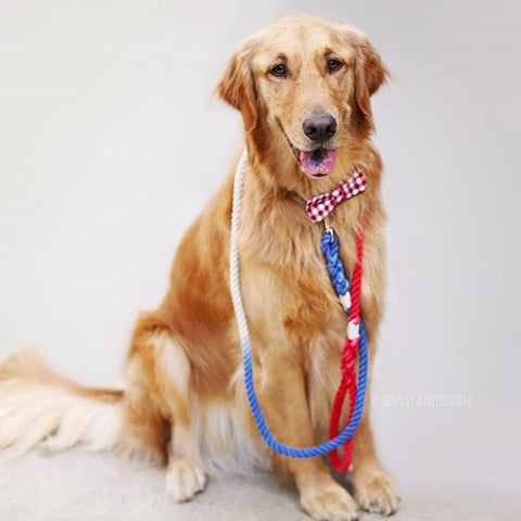Patriotic Leash