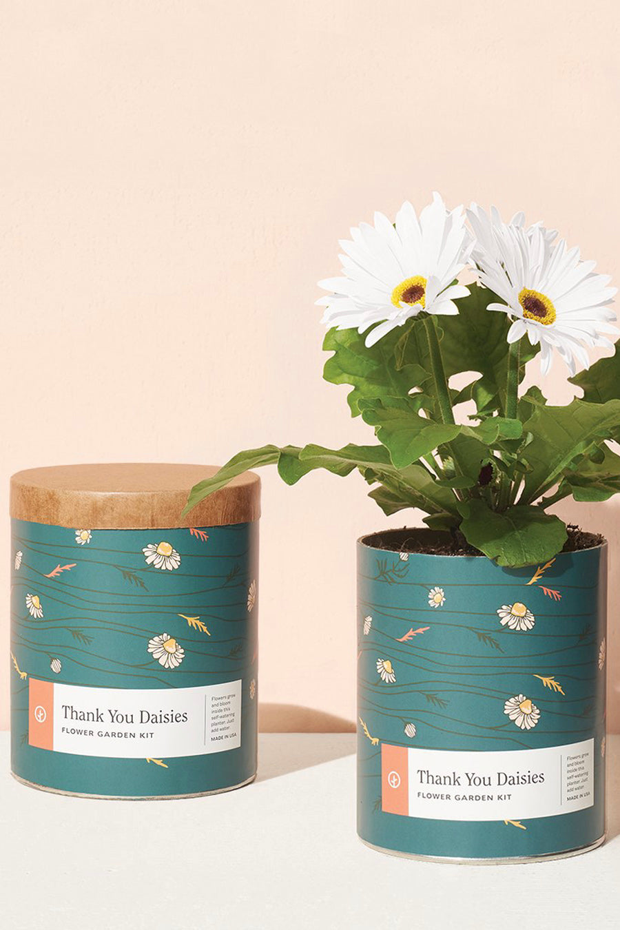 Waxed Planter | Thank You Daisies