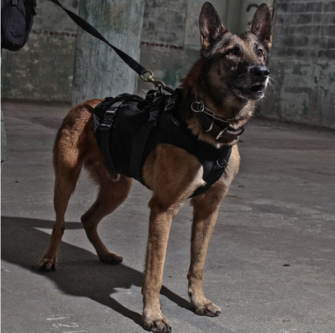 Tactical K-9 Harness