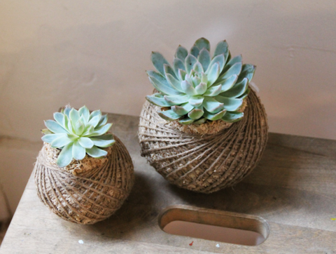 Make your own Kokedama Workshop | with Lilian Yangot | Saturday August 10th, 2019